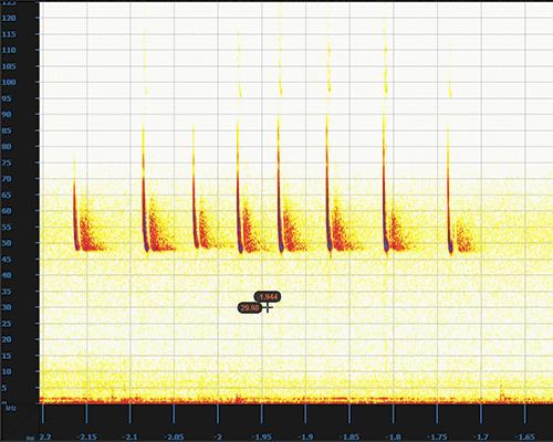 Analyse spectrogramme sonagramme détermination chiroptère ultrason signaux de chauves souris FFT Microphone Pettersson Titley