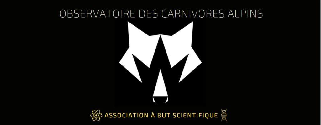 Observatoire des carnivores alpins  expert loup lynx suivi piège photographique pistage loup génétique crotte de loup régime alimentaire analyse spatiale conservation amélioration des connaissance biologique cycle de vie du loup